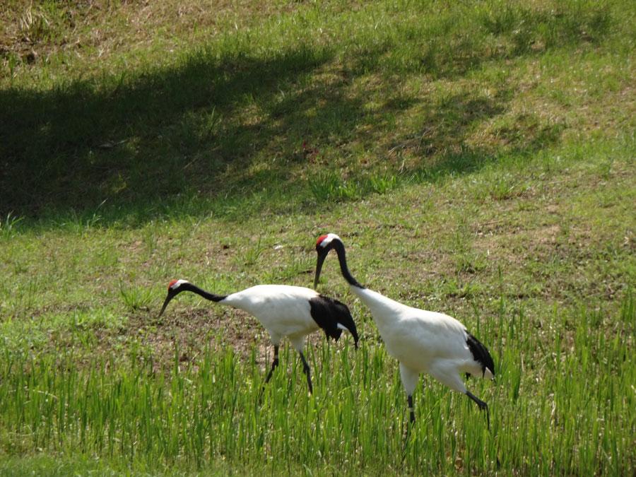 岡山県自然保護センター