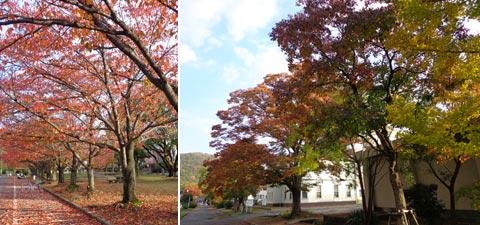岡山大学キャンパスの秋