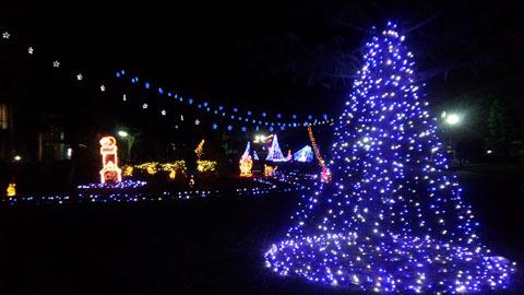 岡山大学のクリスマス
