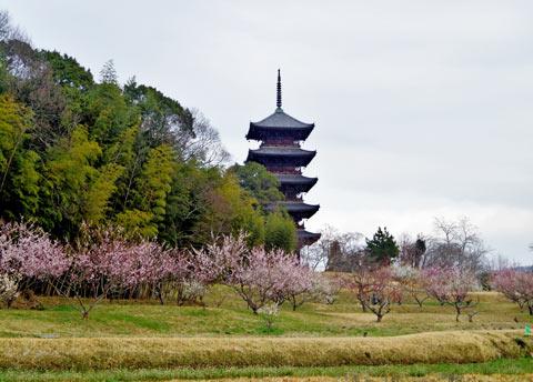 備中国分寺は梅の花