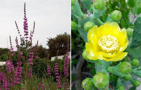 植物園と薬草園