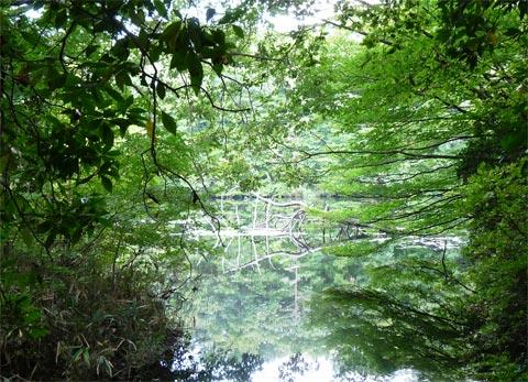 新見市「鯉が窪湿原」