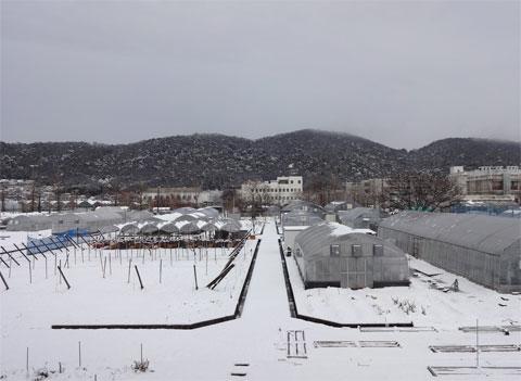 岡山にて20年ぶりの雪(2014年2月8日)