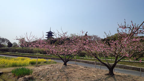 五重塔と桃