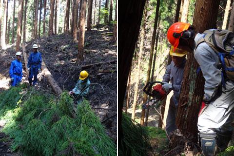 環境保全型森林ボランティア活動参加