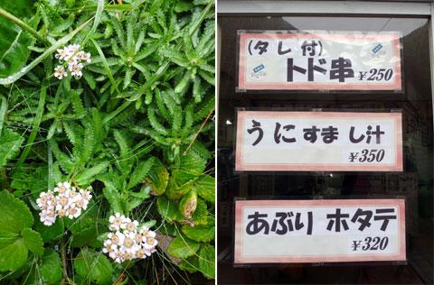 澄海(スカイ)岬