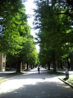 東京大学大学本郷キャンパス