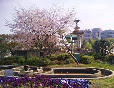 名古屋鶴舞公園の桜