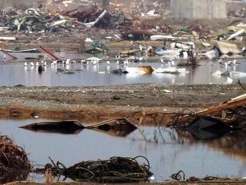無数のカモメが群れ「東日本大震災現地調査」