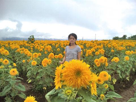 向日葵畑と娘