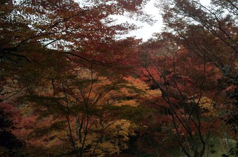 京都の初冬 04